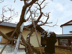 音酔いウォーク、たくさん楽しみました!曇り空でしたが、飯坂温泉の町を歩きながら写真撮影。 #渡辺シュンスケ #シュローダーヘッズ #SchroederHeadz Cabin, Mirror, House Styles, Home Decor, Decoration Home, Room Decor, Cabins, Mirrors, Cottage