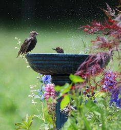 birdbath and the bird....