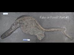 Dean Lomax CNN Inspirations: Wild Discoveries [new finds in palaeontology, 2017] - YouTube