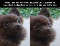 Funny Animal Picture Dump Of The Day 26 Pics
