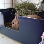 Pretty good article on litter training rabbits.  Some good stuff in the comments, too.
