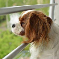 Paar bindet Hund auf dem Balkon fest - und fährt in den Urlaub! | BRIGITTE.de