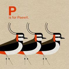 Scott Partridge - Illustration - A is for Avocet