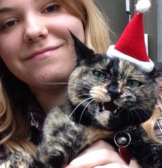 Catrina NOT happy about picture day!  #catrina #catrinathecat  #cats #catswithhats #catswithattitude #catitude #animalsincostumes #christmas #tortie