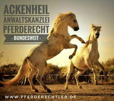 Haftung Vergesellschaftung #pferdeanwalt Ackenheil bundesweite Rechtsberatung #pferderecht  #pferdetritt #pferd #hengst #pferderechtsexperte