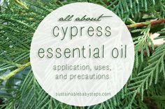 Cypress Essential Oil: Uses, Benefits, and Precautions - Sustainable Baby Steps Cypress Oil, Cypress Essential Oil, Essential Oil Uses, Doterra Essential Oils, Young Living Essential Oils, Hormone Balancing, Natural Oils, Natural Healing, Baby Steps