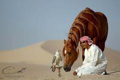 Husain Al qallaf