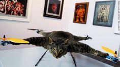 Dead Cat Drone