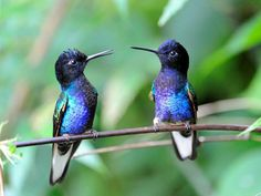 ❥ sweet little hummer chat :)