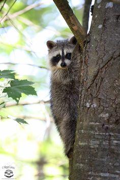 Bandit by mlorenz #animals #animal #pet #pets #animales #animallovers #photooftheday #amazing #picoftheday