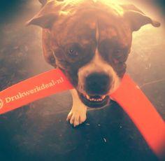 Bulldog met Drukwerkdeal boomerang   uploaded by www.drukwerkdeal.nl