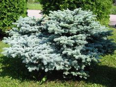 Siirry tuotteeseen 30th, Herbs, Plants, Herb, Plant, Planets, Medicinal Plants
