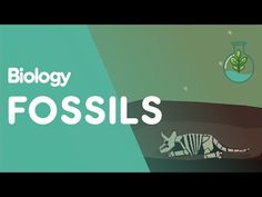 Fossils are the preserved remains of an animal or plant in a rock. Many of the fossils discovered so far are the ancestors of organisms that are alive today. Science Curriculum, Science Lessons, Teaching Science, Science Activities, Science Videos, Science Biology, Science Resources, Life Science, Teaching Ideas
