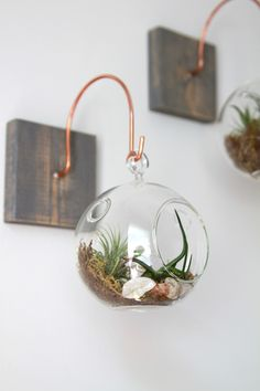 Hand crafted wood and copper mounts with terrarium from Gems of the Soil.