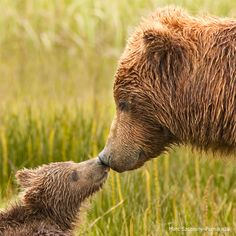 Photo of the Week: Beary Affectionate  05-09-2012 // NWF Staff .