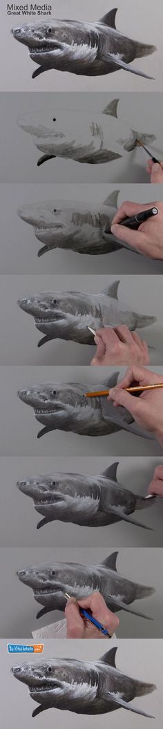 Create a drawing of a Great White shark with a variety of drawing media in this lesson. #drawing #mixedmedia #sharks