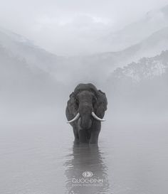 Elefant in the fog . Image Elephant, Elephant Love, Elephant Images, Beautiful Creatures, Animals Beautiful, Animals And Pets, Cute Animals, Elephas Maximus, Elephants Photos
