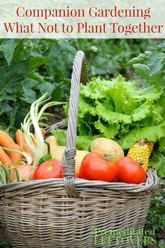 starting a vegetable garden from scratch how to start a garden from