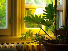 Sélection et conseils de plusieurs plantes d'intérieur qui s'accommoderont d'un coin un peu sombre... avec fleurs ou feuillage.