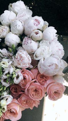 Flower Iphone Wallpaper, Iphone Background Wallpaper, Flower Backgrounds, Aesthetic Iphone Wallpaper, Flower Wallpaper, Flowers Nature, Spring Flowers, Beautiful Flowers, Luxury Flowers