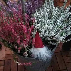 KOTI&SISTUS. PUUTRHA. Ajankohtaista KANERVAT...Mitkä ovat Sinun Suosikki Kanervat? Minun TYYLI. Ihanat tontut, Joulu on tulossa. Oletko Sinä JOULU IHMINEN? Minä Rakastan&nautin Joulu valmisteluista, Joulunajasta. Aloitan valmistelut ajoissa. SINÄ? Nähdään HYMY #koti #sisustus #deko #kukat #kasvit #puutarha #parveke #blogi #trendit ☺