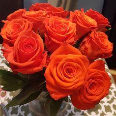 Roses, beautiful flowers, orange roses
