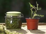 Korn, Herb Garden, Compost, Mason Jars, Herbs, Home Decor, Alcohol, Decoration Home, Room Decor