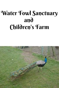 A trip to a waterfowl sanctuary - Water Fowl Sanctuary and Children's Farm - Over 40 and a Mum to One Days Out With Kids, Family Days Out, Farm Day, London Eye, Places To Go, Things To Do, Water, Children, Water Water