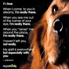 23 Suggestion on Weight Loss Menues Dog Grief, Pet Loss Grief, Loss Of Dog, Pet Loss Quotes, Dog Quotes, Animal Quotes, Animals And Pets, Cute Animals, Miss My Dog