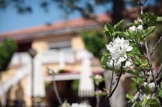 Primavera en Murcia