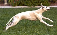 Our dog Toby. Mark and Olga, Corona, CA - 8/16/2015