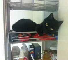 Refrigerator Cat....my little Charlie likes to try getting in the fridge!!!