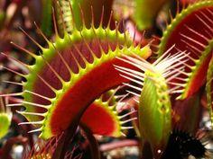 fleischfressende pflanzen arten pflanzen ideen