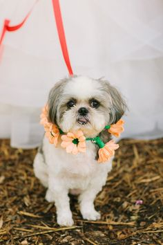 sweet pup with a paper flower collar, photo by Anahi Navarro http://ruffledblog.com/whimsical-austin-wedding #pets #weddingpets #ringbearer
