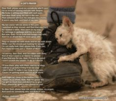 A Cat's Prayer. So sad, and unfortunately true for so many. Adopt a pet, save a life! I Love Cats, Cute Cats, Funny Cats, Adorable Animals, Cat Quotes, Animal Quotes, Save Animals, Animals And Pets, Crazy Cat Lady