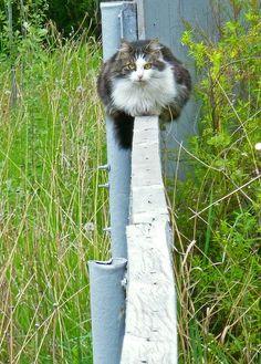 balance beam kitty