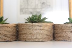 As soon as I saw them I knew what I wanted to do with them. When I got home, I used my hot glue gun and wrapped each can in twine. And now I have three, charming little potted succulents. Pinterest : Jess Barnett