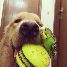 365jours.ovh | C'est l'histoire d'amitié entre un chien, 8 oiseaux et un hamster