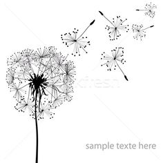 Two dandelions in wind on light blue background. Dandelion Drawing, Thing 1, Light Blue Background, Medical Illustration, Perfect Photo, Royalty Free Photos, Art Images, Clip Art, Dandelions