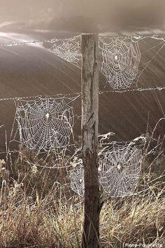 Nature is beautiful: Spider webs Beautiful World, Beautiful Places, Beautiful Pictures, All Nature, Amazing Nature, Spider Art, Spider Webs, Foto Macro, Jolie Photo