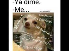 ¿Has visto la foto de este perro chihuahua? Pues este divertido meme se está expandiendo rápidamente en las redes sociales.