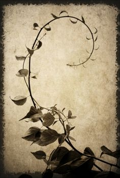 ) by photo Jen G. Thinking of incorporating this into a tat design Fotografia Macro, Tattoo Illustration, Colorful Roses, Pastel, Background Pictures, Fauna, Black White Photos, Book Of Shadows, Art Forms