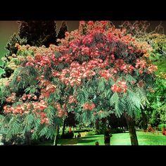 The tree - @ilaria_agostini- #webstagram