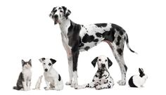 Photo about Group portrait of black and white animals - pets - in front of white background. Image of isolated, indoors, animal - 14539295 Carpet Brands, Photo Grouping, My Favorite Color, Royalty Free Photos, Black And White Photography, Photo Editing, Wildlife, Portrait, Pets