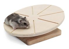 Living World Green Wooden Running Disc for Hamster/Mice/Gerbils ** Check out the image by visiting the link. (This is an affiliate link) Dwarf Hamster Toys, Hamsters As Pets, Hamster House, Pet Rats, Hamster Ideas, Hamster Stuff, Rodents, Pet Stuff, Pets