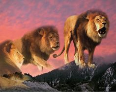 Nam-myoho-renge-kyo is like the roar of a lion, Nichiren says. It is by chanting powerful daimoku, like a lion's roar, that we can move the Buddhist deities, the protective forces of the universe. The voice is very important--it has profound power. While naturally being careful not to disturb your neighbors, I hope you will endeavor to chant cheerful and powerful daimoku that reaches all the Buddhist deities and Buddhas throughout the ten directions.  Daisaku Ikeda