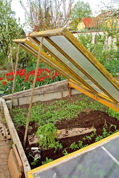 Pestovanie zeleniny v chladných mesiacoch