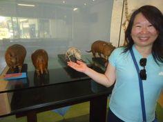 Aberto em 1984, o acervo do museu é composto por esqueletos, animais taxidermizados, órgãos e estruturas anatômicas de diversos animais vertebrados, na sua maioria mamíferos. O museu está aberto de terça a sábado, e o ingresso custa R$ 6,00.