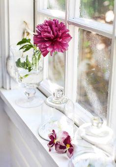 . Magenta, Rose Fushia, Pink Roses, Farm House Colors, Pink Grapefruit, Rose Cottage, Colorful Garden, Love Flowers, Red Apple