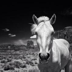 Horse dialog